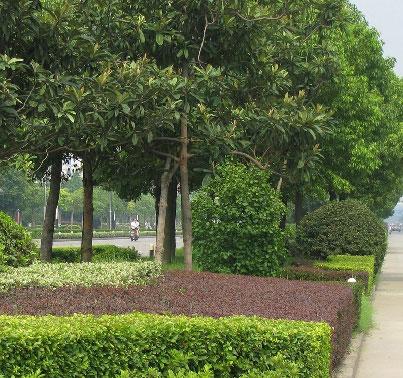 江西园林绿化养护